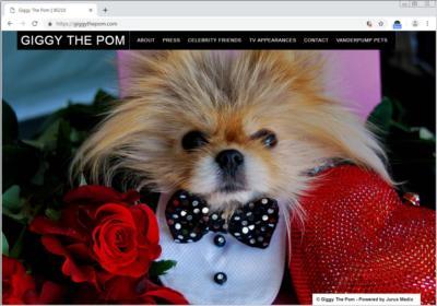 Giggy the Pom